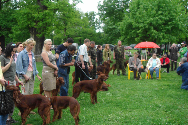 Выставка охотничьих собак в слободском
