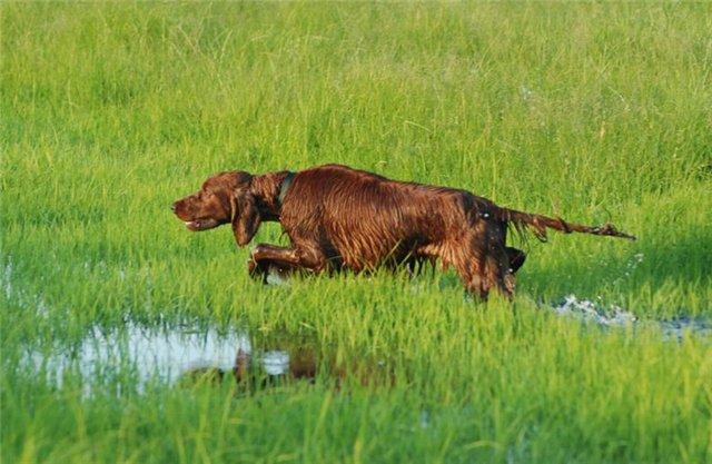 Залитые луга и мокрая насквозь собака
